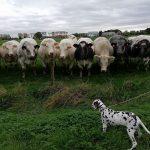 Pets versus cattle